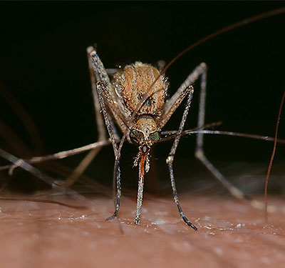 residential mosquito treatment in Loveland